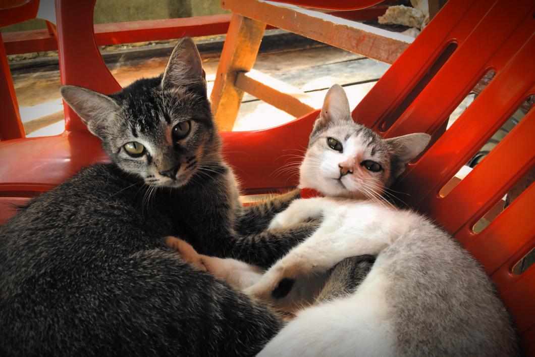 cats_perhentian