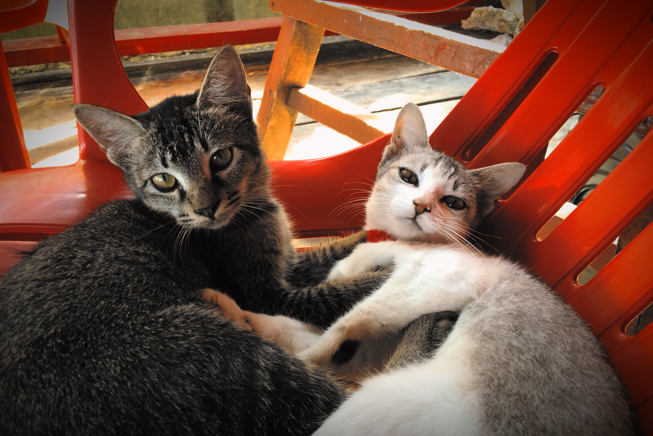 cats_perhentian