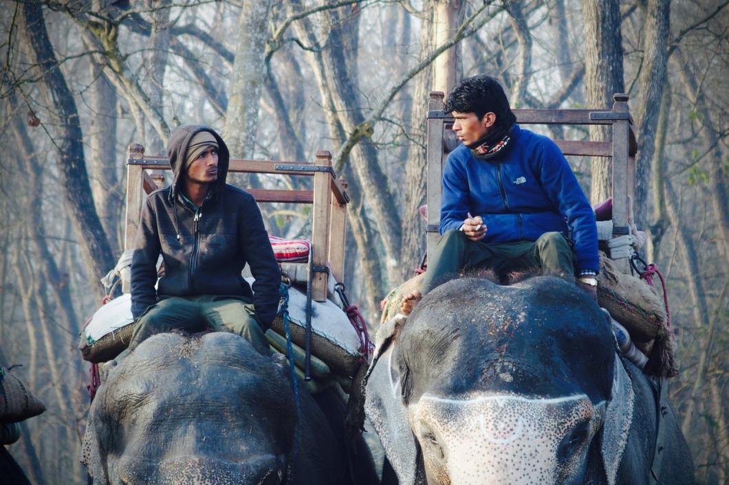 chitwan_elephant